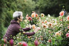 A woman cutting flowers in an organic commercial plant nursery flower garden Stock Photos