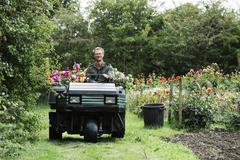 A man driving a small garden truck path between flowerbeds Stock Photos