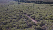 Following male deers running in the smoothness Stock Footage