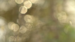 Background With Spots Bokeh Highlights and Stalks of Grasses in Large Stock Footage