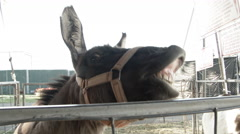 Funny Donkeys Stock Footage