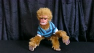Baby mongky puppet Stock Footage