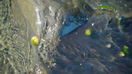 Moss and weeds on the rocks in the ocean Stock Footage