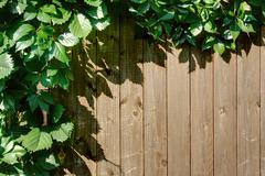 Natural frame vine planks wall Stock Photos