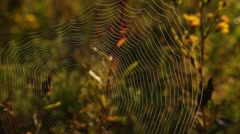 Spiderweb emerges from the blur Stock Footage