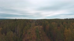 Autumn forest on the top Stock Footage