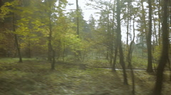 View from a car. Driving along the forest tree line. Stock Footage