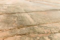 Marine fossilsof prehistoric marine creatures Stock Photos