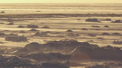 Wide golden light on snow flowing over arctic sea ice Stock Footage