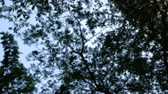 Foliages and the sky Stock Footage