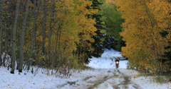 Motorcycle mountain road snow autumn colors 3 DCI 4K Stock Footage