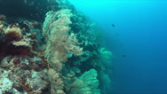 Coral reef with big sea fans.  4k Stock Footage
