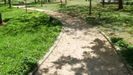 Path through the park Stock Footage