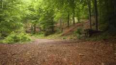 A man jumping while mountain biking in a forest. Stock Footage