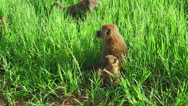 Mother and child baboons Stock Footage