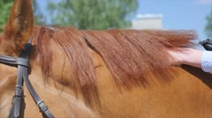 Close up of female hands grooming horse on the ranch Stock Footage