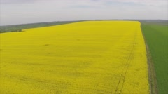 Amazing aerial view of yellow fields Stock Footage