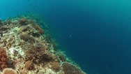 Edge of a coral reef.  4k Stock Footage