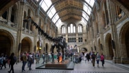 Amazing Natural History Museum in London Stock Footage