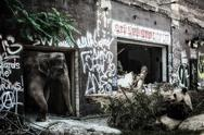 Elephant and Giant Panda Industrial Ruins Stock Photos