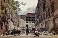 Bison in Industrial Ruins Stock Photos
