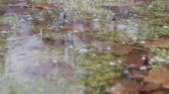 Detailed tracking shot of wet grass and leaves in the rain. Stock Footage