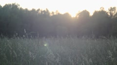 Man walking through tall grass towards the setting sun. Stock Footage