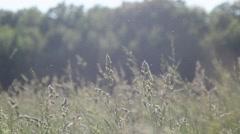 Man running through a field of tall grass. Stock Footage