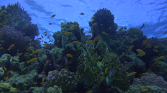 Plenty Of Colorful Fish Inhabit A Beautiful Coral Reef Beneath The Surface 4K Stock Footage