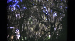1951: shady tree cover from spanish swap moss willow trees hidden above FLORIDA Stock Footage