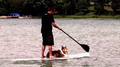 A man stand-up paddleboarding SUP with his dog. Stock Footage