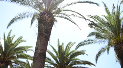 Palm trees Portoferraio, Italy on the island of Elba. Stock Footage