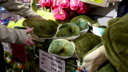 People buying sea turtle stuffy inside Vancouver aquarium gift shop. Stock Footage