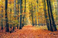 Path in autumn forest Stock Photos