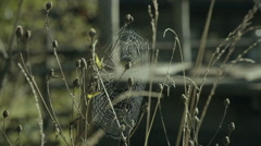 Spiderweb on the grass Stock Footage