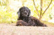 The Dog hair black in The Park Stock Photos