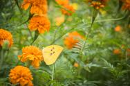 The Flowers and butterflies swarm in The Park Stock Photos