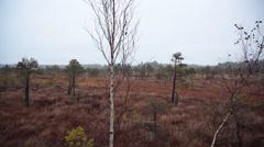 Kemeri swamp landscape in Latvia Stock Footage