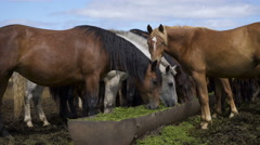 Curious young horses at an enclosure Stock Footage