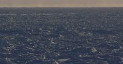 Polar bears on sunny sea ice walk through frame Stock Footage
