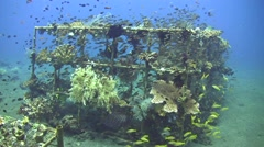 Artificial reef full of coral and fishes in Coral Garden, Tulamben, Bali Stock Footage