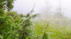 Spider Web with Dew Drops Stock Footage