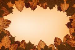 Autumn leaves pattern Stock Photos