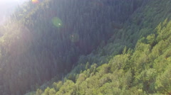 Sunny day in the forest. aerial view Stock Footage