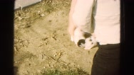 1968: person taking cats out of box in the summer sunshine DILLER, NEBRASKA Stock Footage