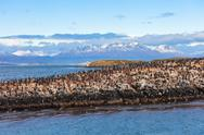 Bird Island near Ushuaia Stock Photos