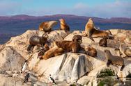 Seal Island near Ushuaia Stock Photos