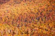 Golden autumn forest background Stock Photos
