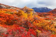 Golden forest in Patagonia Stock Photos