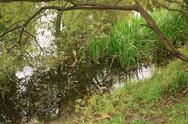 Pond in city park in autumn season Stock Photos
